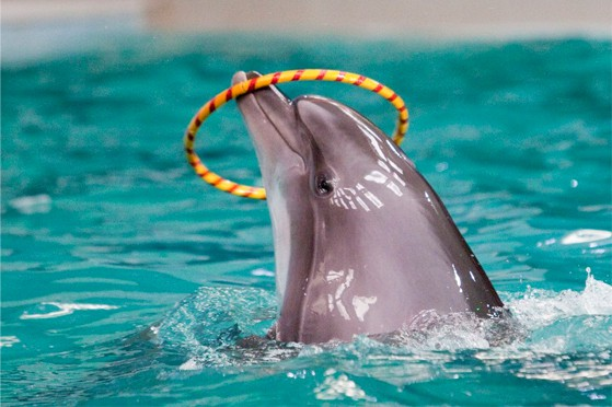 The dolphin superpowers that other superheroes would envy
