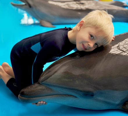 Buy now – swim with dolphins later!