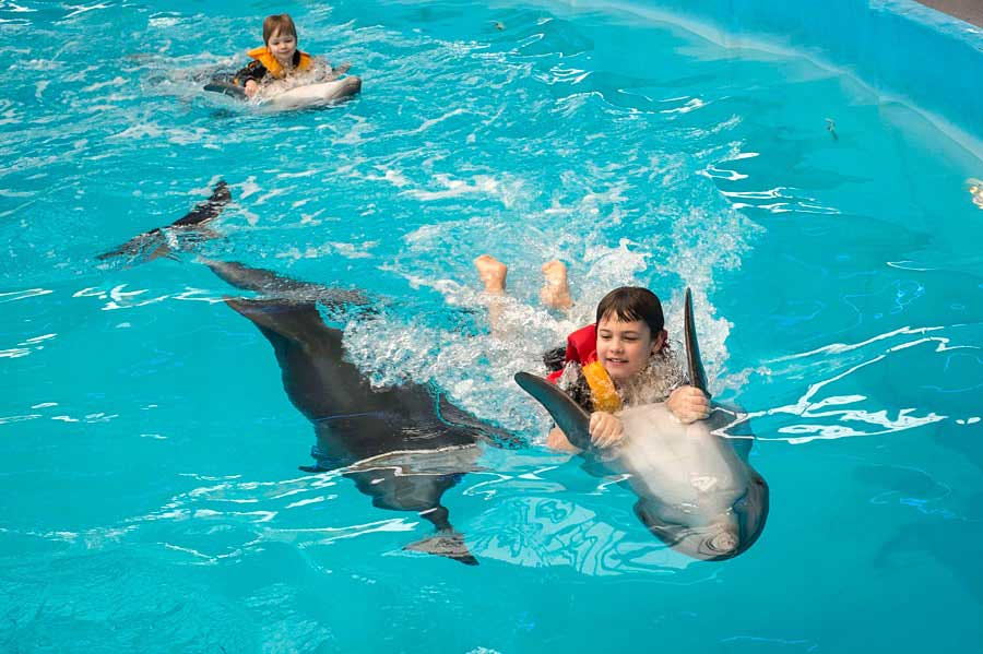 The Magic of Dolphin-Assisted Therapy